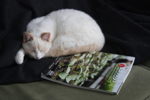 farm cat dreaming