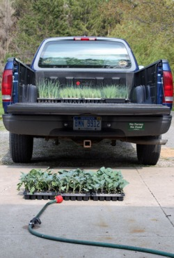 truck with plants